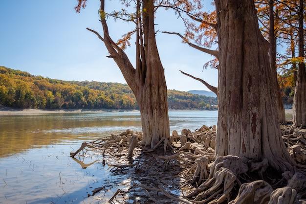 Cypress lake en succo. atracciones anapa.
