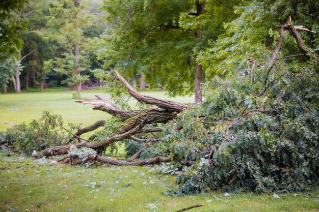 Daño de tormenta roto después de huracán tormenta árbol caído una tormenta.
