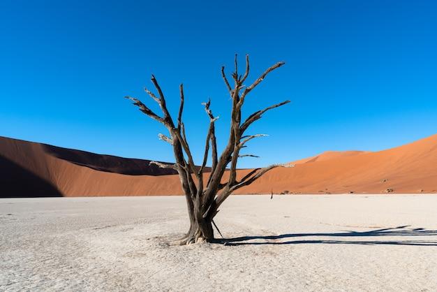 Deadvlei en el parque nacional namib-naukluft sossusvlei en namibia - dead camelthorn trees contra las dunas de arena de color naranja con cielo azul.