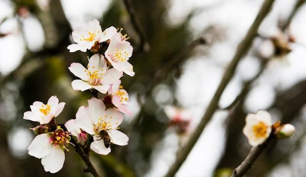 Decoración de bella flor blanca al aire libre