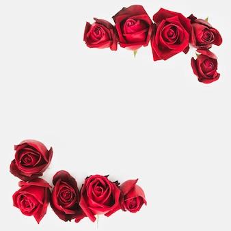 Decoración de rosas rojas en la esquina de fondo blanco
