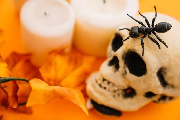 Decoración de halloween con hormiga y cráneo
