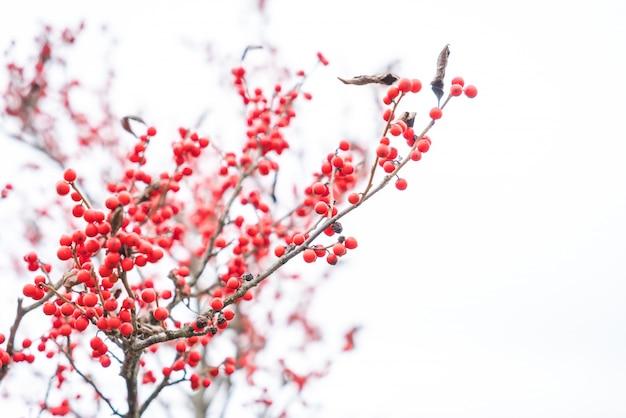 Decoración de navidad bayas rojas del acebo