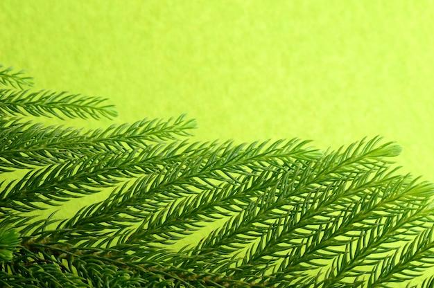 Decoración navideña: bola de navidad y adornos con la rama del árbol de navidad