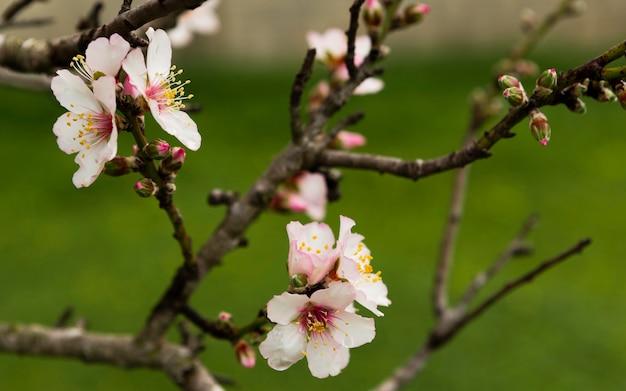 Decoración de ramas con flores.