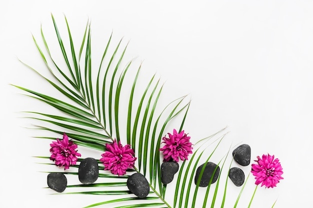 Decoración realizada con hoja de palma; aster flores y piedras de spa sobre fondo blanco