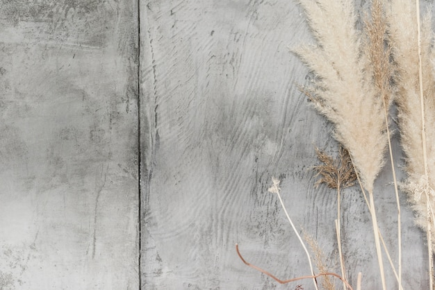 Decoración secada de las plantas del primer en el muro de cemento