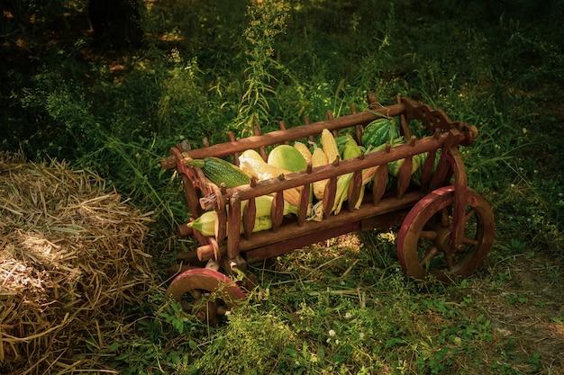 Decoraciones para la fiesta de la cosecha con un pesebre de madera con regalos de los campos de maíz, sandía