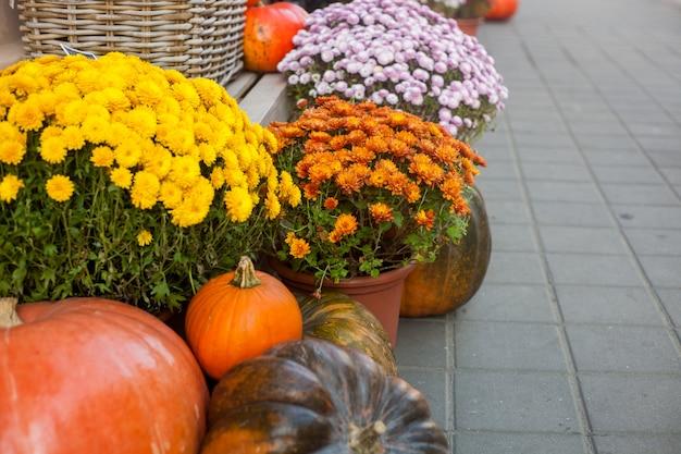 Decoraciones de otoño u otoño al aire libre con grandes calabazas y flores diferentes.