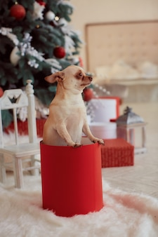 Decoraciones de vacaciones de invierno. se sienta chihuahua perro gracioso