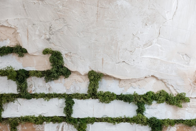 Decorativo muro de ladrillo blanco con musgo.