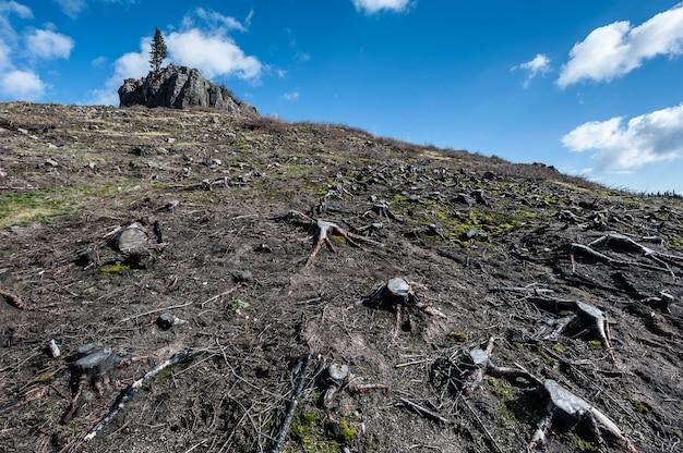 Deforestación. cortar pinos en la ladera de una montaña, desastre ecológico.