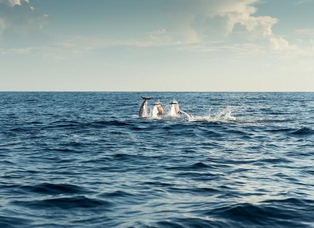 Delfines en el océano pacífico
