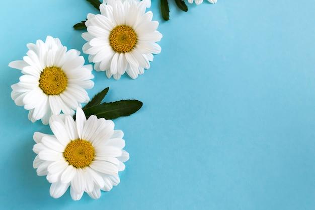 Delicada manzanilla blanca sobre azul.