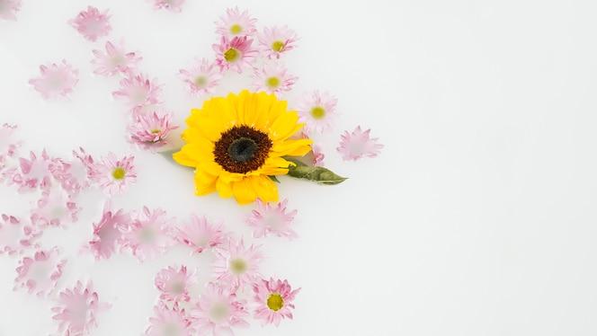 Delicadas flores amarillas y rosas flotando en el agua