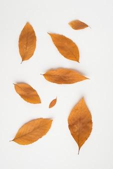 Delicadas hojas de otoño en blanco