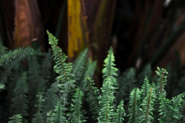 Delicadas hojas de helecho en el bosque