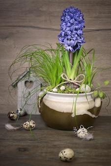 Delicado jacinto azul