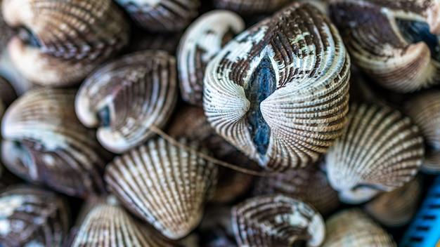 Deliciosos mariscos frescos de berberechos