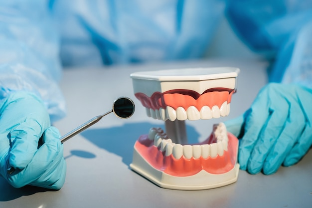 Un dentista con guantes azules y una máscara sostiene un modelo dental de los maxilares superior e inferior y un espejo dental.