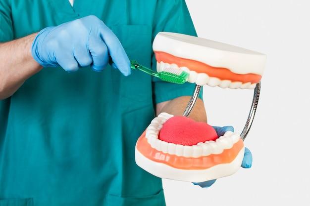 Dentista mostrando cómo cepillarse los dientes con una prótesis de juguete