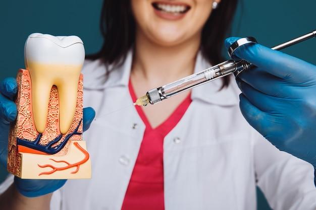 Dentista que muestra cómo hacer anestesia en el modelo de diente.