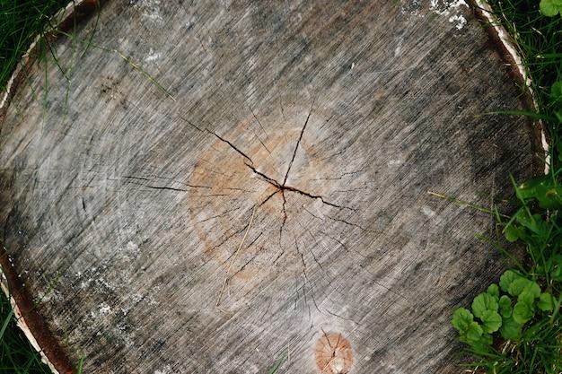 Derramar el árbol sobre la hierba.