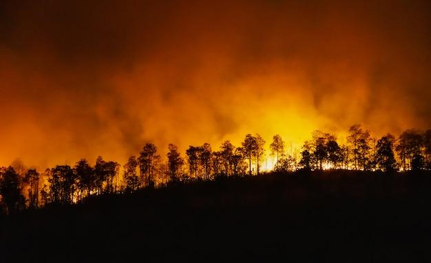 El desastre de un incendio en la selva tropical está ardiendo causado por humanos