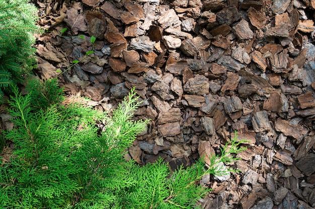 Desbroce astillas de madera de corteza de árbol conífero en un tobogán alpino.