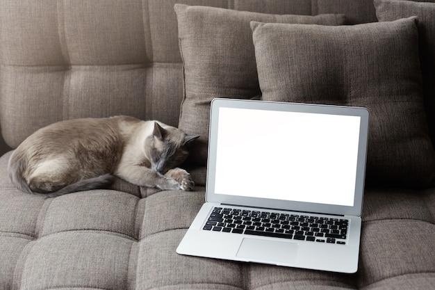 Descansando en casa y sirviendo concepto de internet. ordenador portátil moderno con pantalla de copia en blanco en un acogedor sofá gris cerca de dormir gato tailandés.