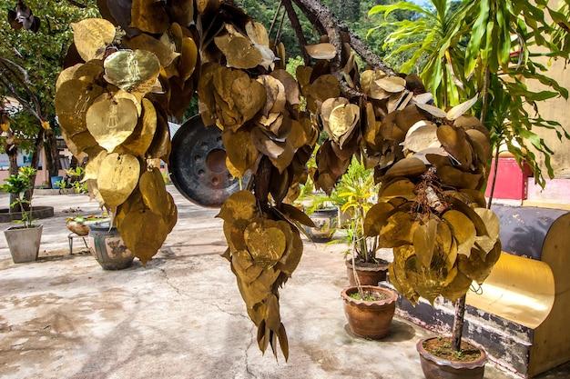 Deseando rama de árbol con hojas doradas. árbol tradicional budista cerca de los templos.