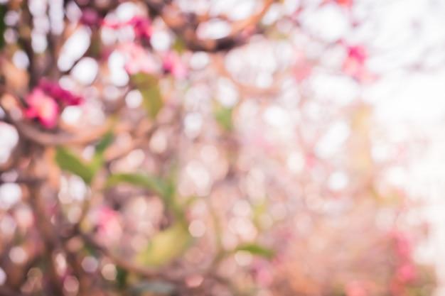 Desenfoque bokeh de hermosa flor rosa tropical y pétalos flor de flor de plumeria