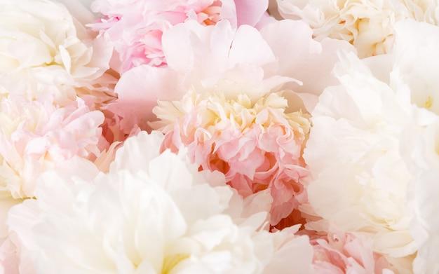 Desenfoque desenfocado pétalos de peonía rosa, fondo de romance abstracto, pastel y tarjeta de flor suave
