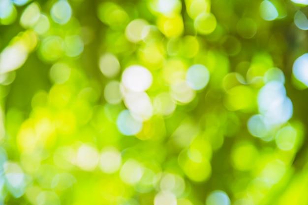 Desenfoque de fondo natural y la luz