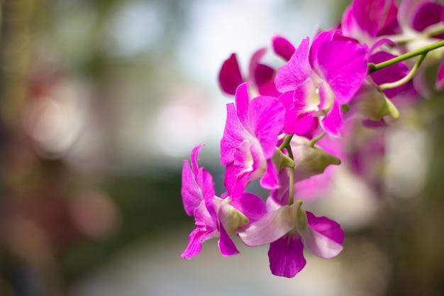 Desenfoque la orquídea rosada con el fondo borroso y copie el espacio.