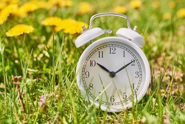 Despertador vintage blanco en pasto con flores de diente de león