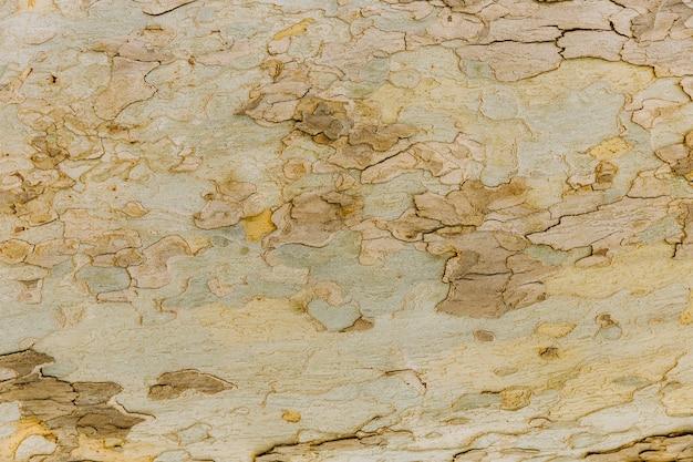 Detalle de la corteza del tronco de un árbol viejo