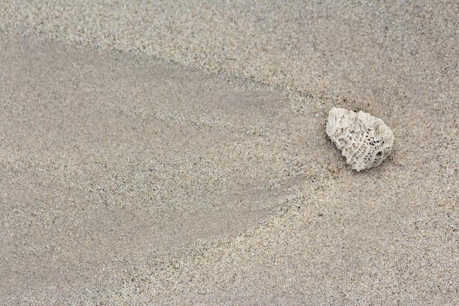 Detalle de coral de arena y cáscara después del agua hacia abajo.