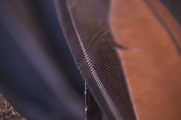 Detalle de fondos de plumas marrones y negras.