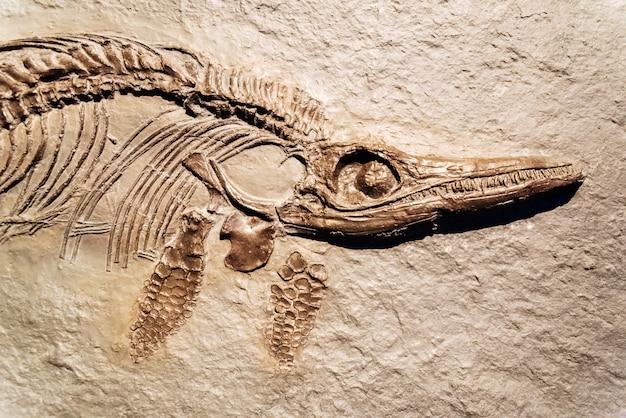Detalle de un fósil de ictiosaurio.