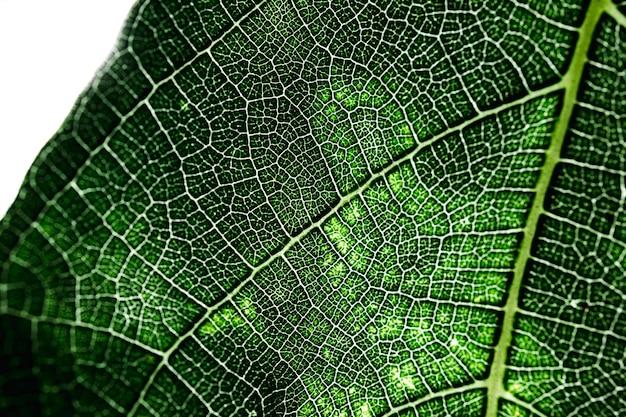 Detalle de una hoja verde