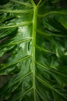 Detalle hojas exóticas verdes