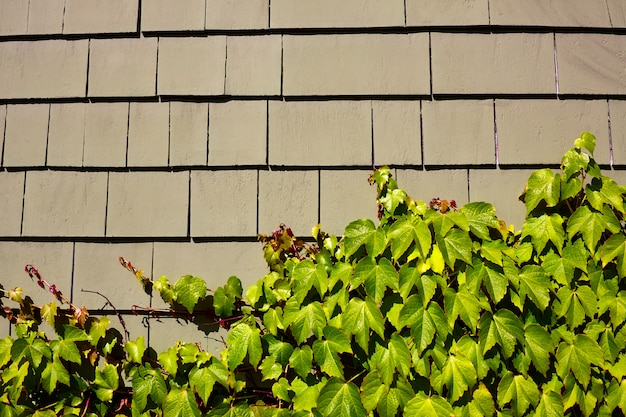 Detalle de pared de madera de cape cod massachusetts