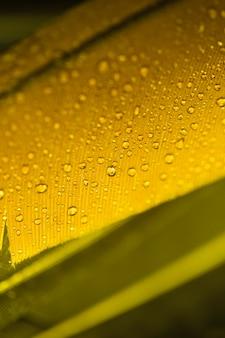 Detalle de pluma amarilla con gotas de agua.