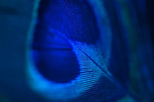 Detalle de la superficie de la pluma de pavo real brillante azul