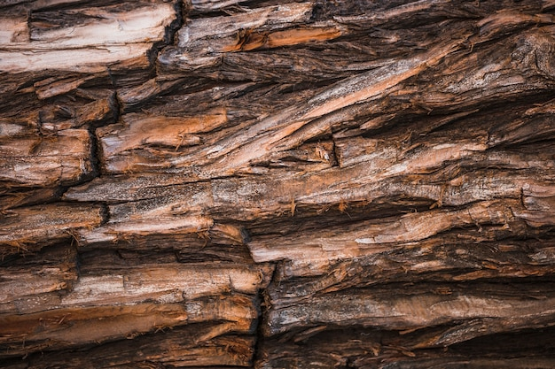 Detalle de un tronco marrón