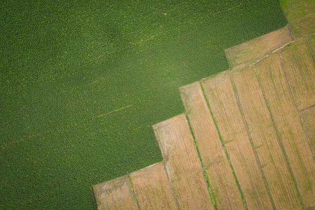 Los detalles del archivo y la fila de la superficie del área de agricultura son campos de maíz y arrozales de vista aérea del agricultor