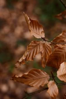 Detalles del bosque capturados a la luz del día