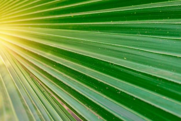 Detalles de hoja verde