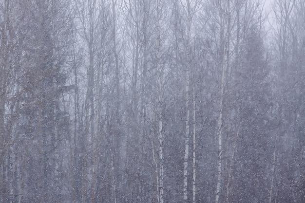 Detalles de la naturaleza de invierno en el campo.